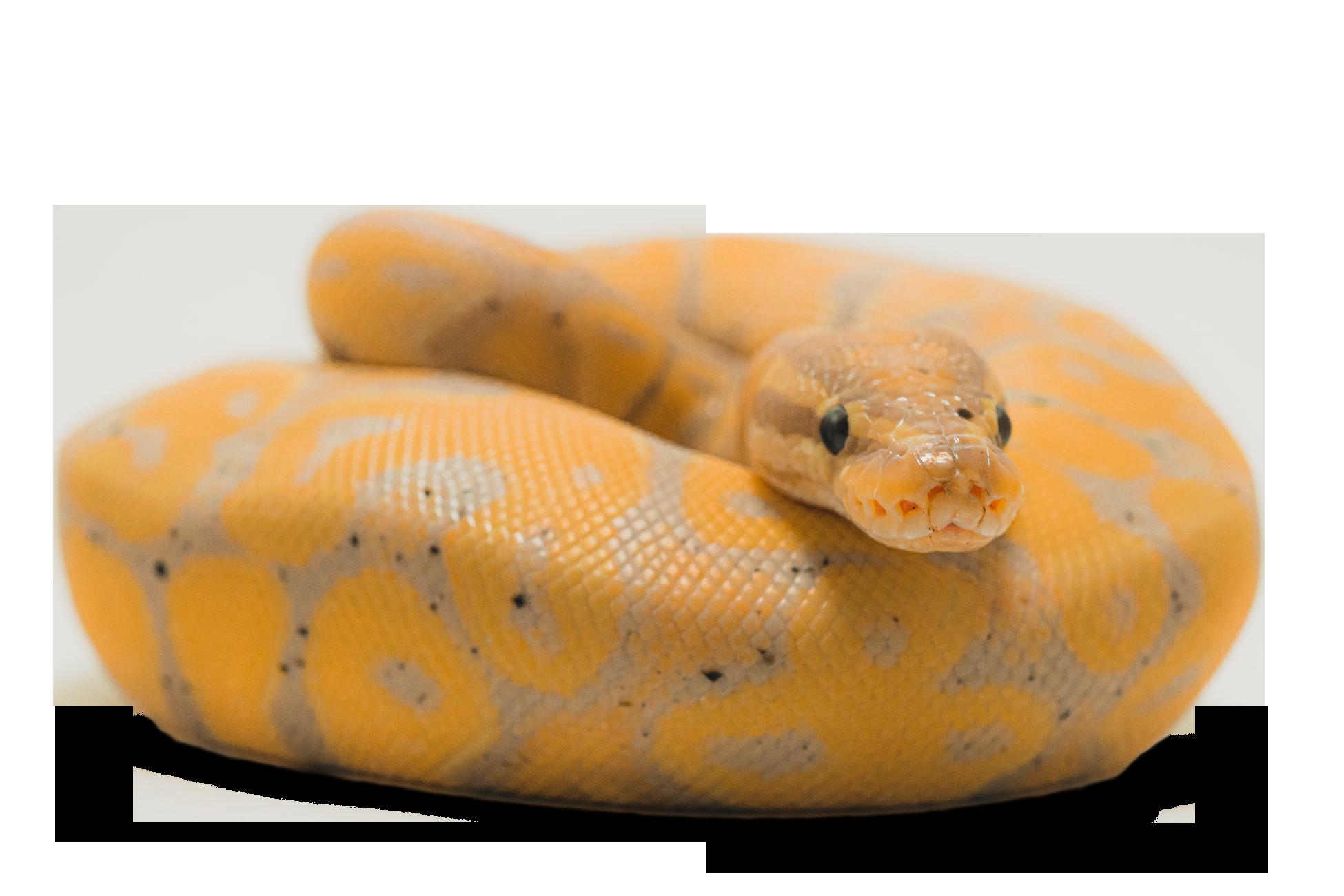 Python Iso